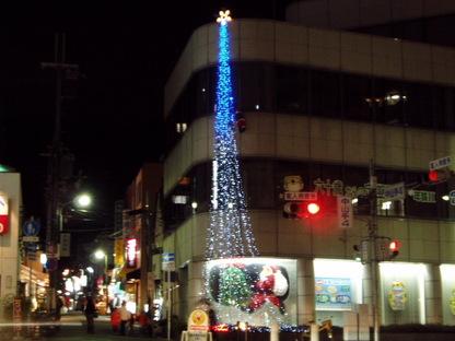 koikawa-tree